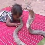 Cobra and a baby