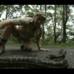 Steve Irwin – Most Deadliest Snakes