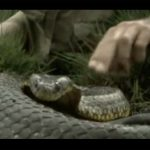 Steve Irwin – Most Deadliest Snakes (part 3)