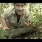 Steve Irwin – Most Deadliest Snakes (part 4)