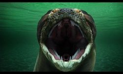Titanoboa-World's biggest snake