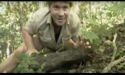 Steve Irwin - Most Deadliest Snakes (part 4)