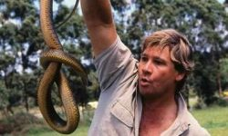 Steve Irwin tribute