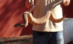 Snake hooks and other snake handling equipment