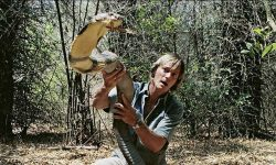 Austin Stevens with a giant King cobra