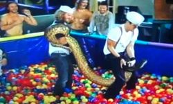 Snake bite Jackass - Anaconda ball pit